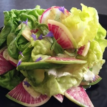 F-20-salad-lettuce-A-side-blackmat-IMG_4900c