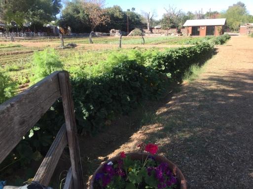 The beautiful goundedness at Maya's Farm, Phoenix, AZ