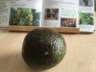 A-avocado-salsa-IMG_7777