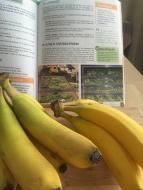 A-bananas-IMG_8809