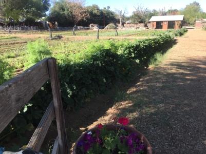 p-168-week-01-stir-farm-img_3688