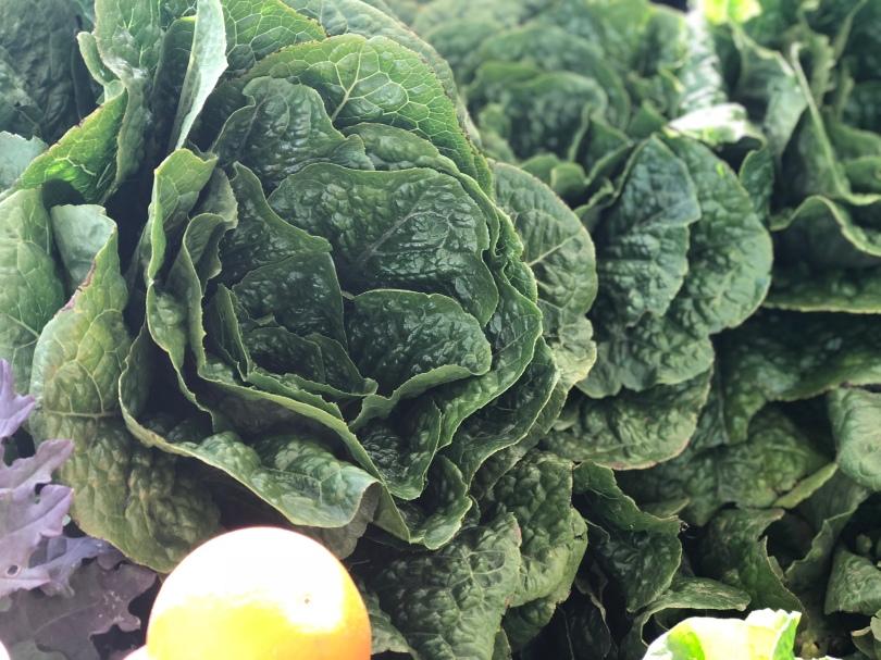 A-veg-lettuce-latchkey-IMG_E8454