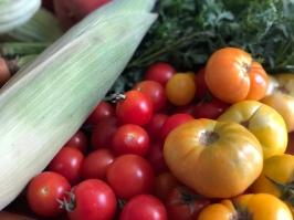 B-tomatoes-IMG_E5837